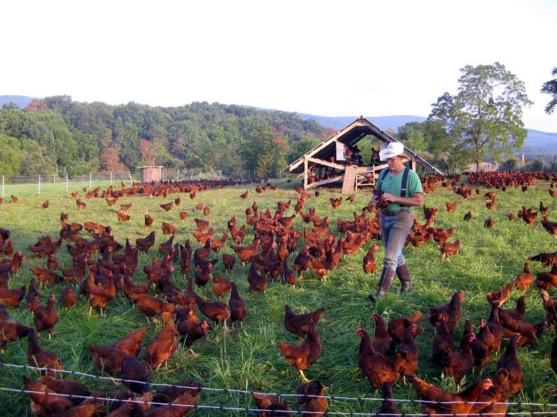 make living small farm