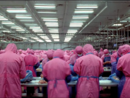 An Eye-Opening Look at Industrialized Food Production