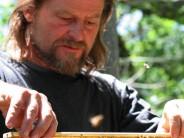BEES | Corwin Bell | Backyard Hive