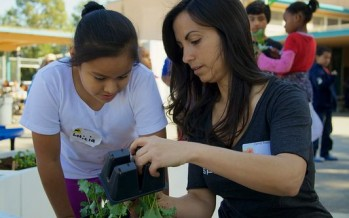 Community Through Food: gardening for change that matters