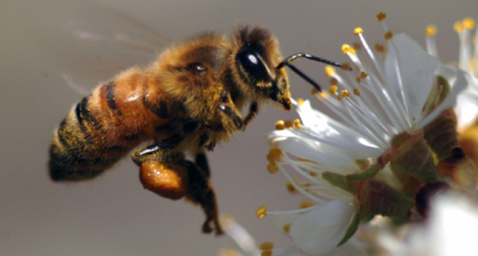 Modifying our perspective about our relationship to the Bees