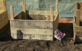 Potato Growing Boxes