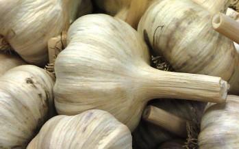 Garlic Planting Guide