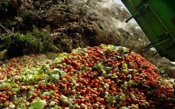 Food Waste Audit; Boulder, Colorado